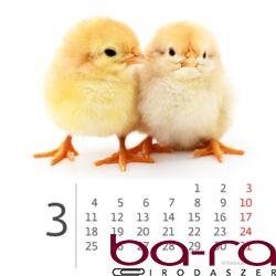 Asztali naptár képes Dayliner mini fehér lapos Kis Állatok 2019.